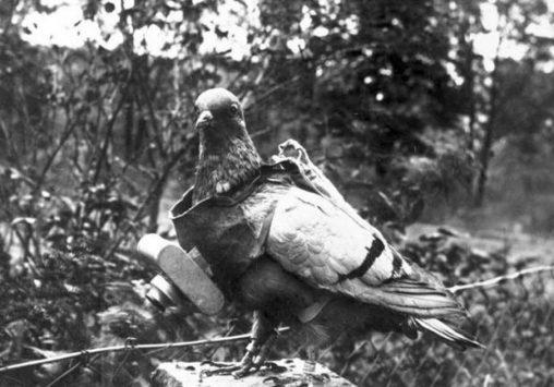 Zentralbild Brieftaubenfotografie, Fotografie mit Hilfe eines kleinen fotografischen Apparates, der an einem der Taube umgehängtem Brustschild befestigt wird. Der Verschluß des Apparates läßt sich so einstellen, das die Aufnahmen während des Fluges zu vorher bestimmten Zeiten erfolgen.